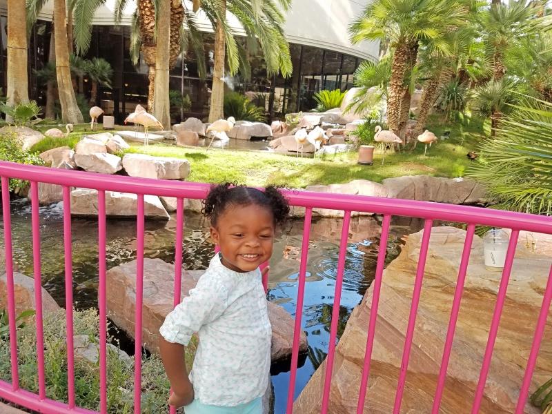 girl standing in front of flamingo exhibit
