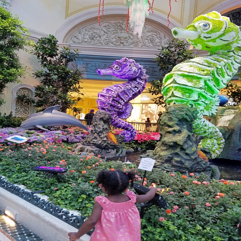 girl looking at botanical garden with seahorse shaped flower display