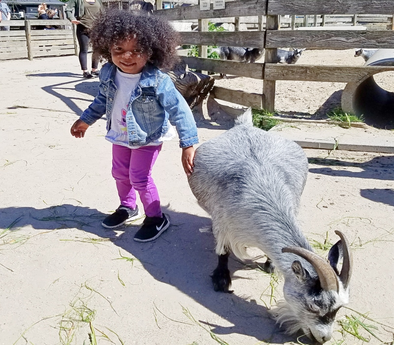 girl petting a goat at the zoo