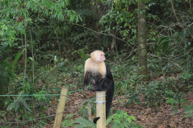 monkey sitting on a perch