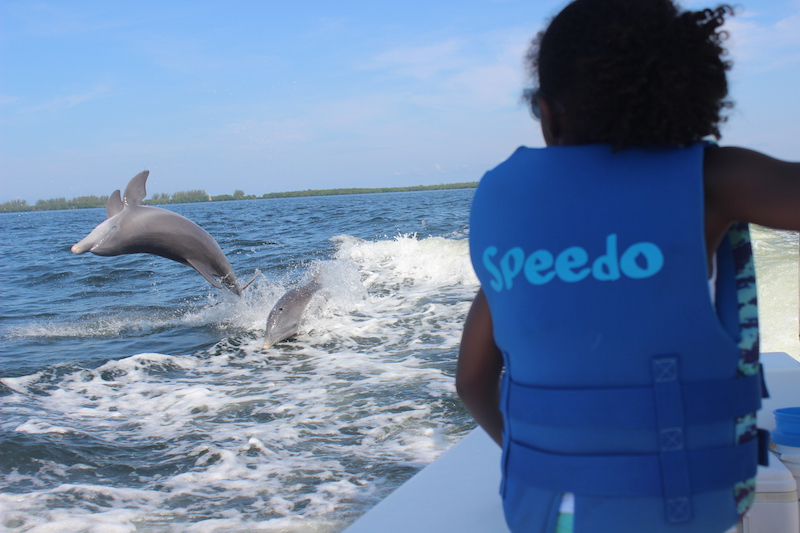 little girl watching dolphins do tricks