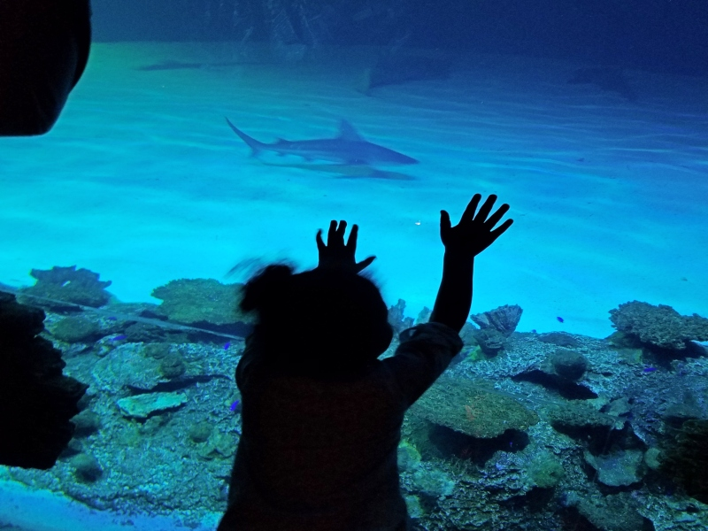 girl leaning on display glass at aquarium