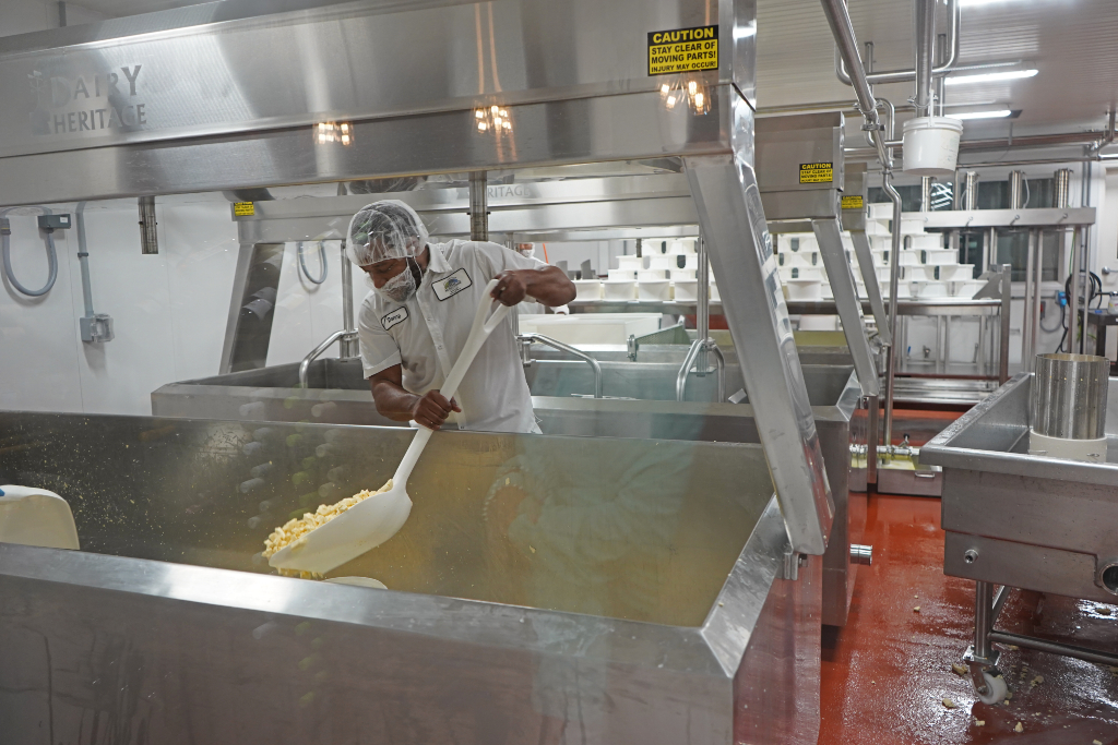 A cheese maker in WI separating the curdles.