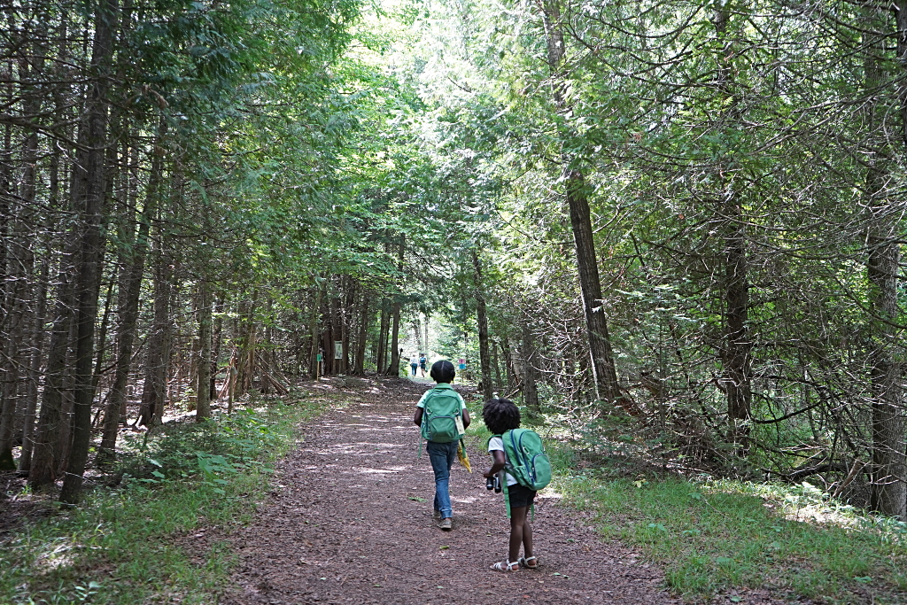 Children on a hiking path between trees.