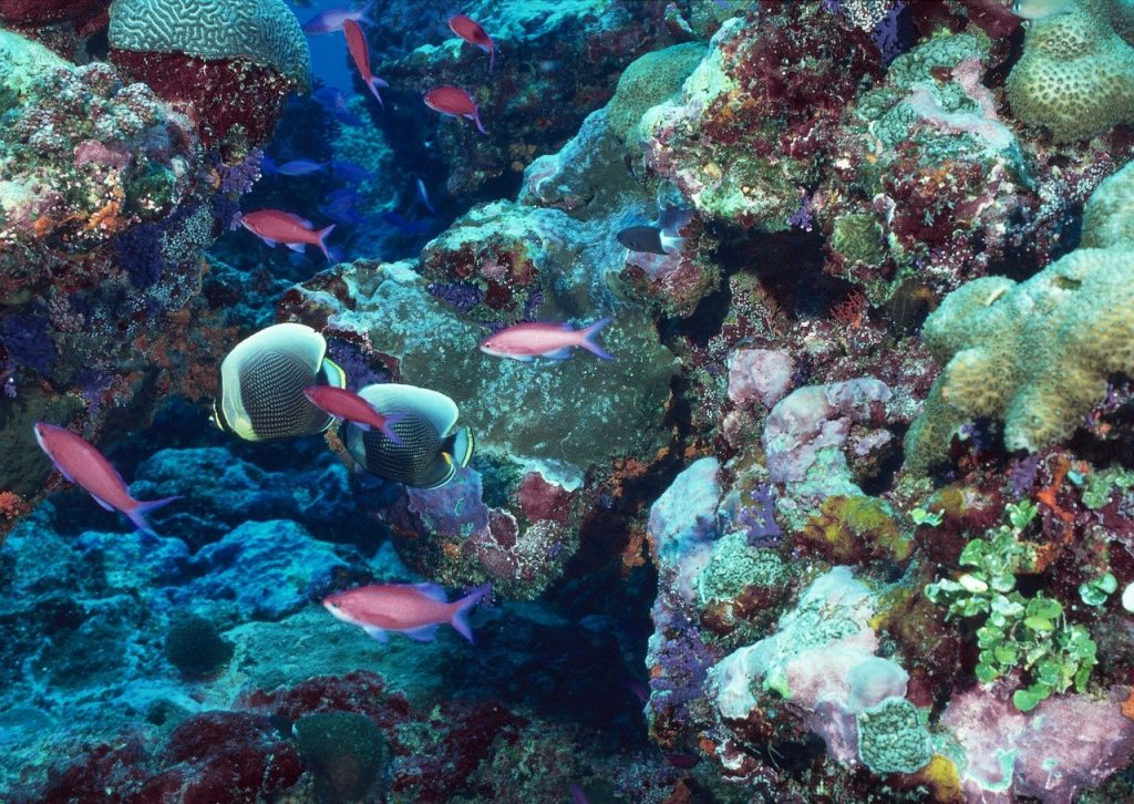 Coral reef with tropical fish.
