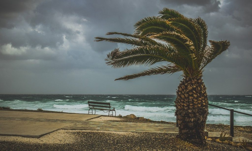 A palm tree with leaves bending in the wind with an ocean in turmoil behind it due to an approaching hurricane in the Caribbean hurricane belt.